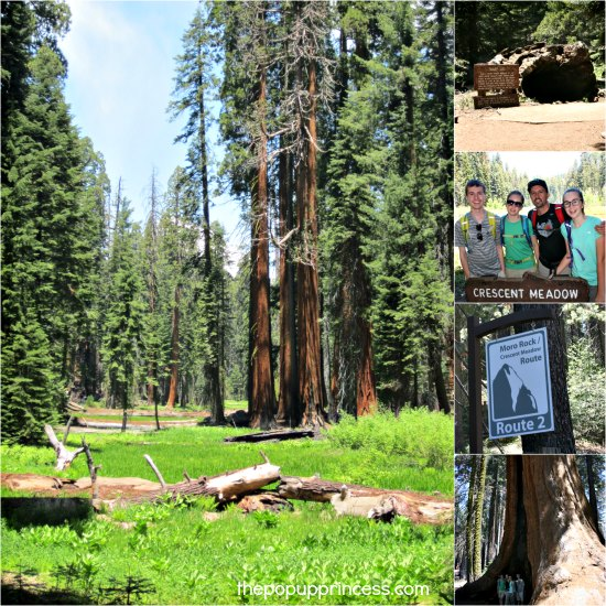 Visiting Sequoia National Park