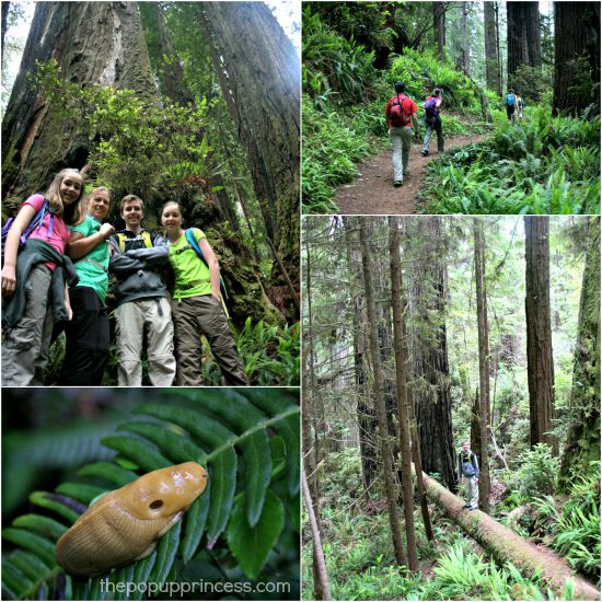 Redwoods Hike