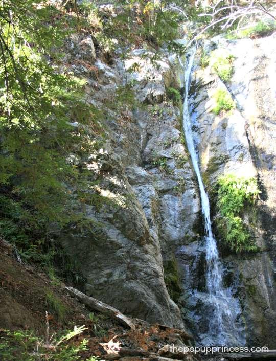 Pfieffer Falls