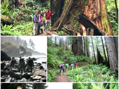 Pop Up Road Trip 2015: Prairie Creek Redwoods, CA